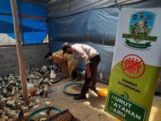 Ari Susanti, warga Dsn.Karang Kebon Timur Desa Bagik Polak yang menggeluti usaha ternak ayam kampung di pekarangan rumahnya, Senin (17/8).