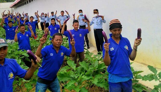 Warga Binaan Pemasyarakatan (WBP) Lapas Way Kanan Berhasil Panen Raya Perdana Tanaman Terong di area Sarana Asimilasi Edukasi (SAE) Narapidana , Senin (22/03)